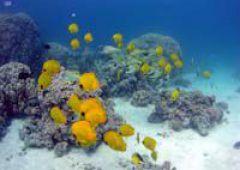 Tryptyk egipski. Część III. Podwodny świat Morza Czerwonego