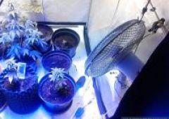 Podejrzanie o udział w narkotykowym procederze zatrzymani