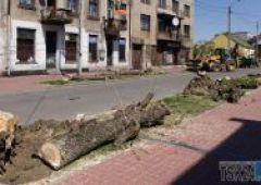 Wycinka drzew na ul. Limanowskiego (uzup.)